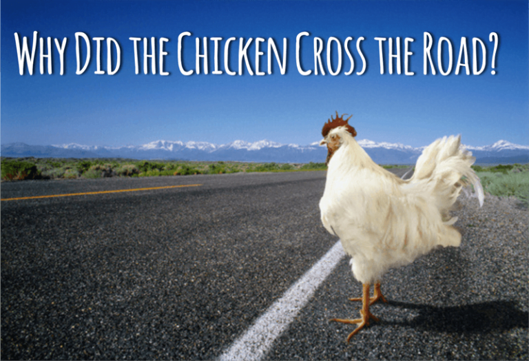 """""""Why did the Chicken Cross the Road?"""" an OpEx Answer"""